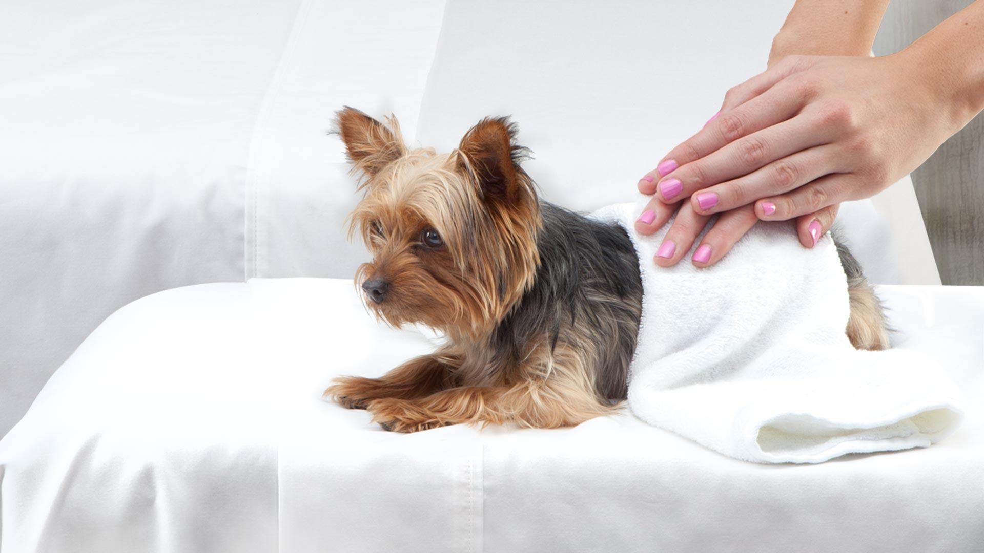 Healthy Food For Small Breed Adult Dog